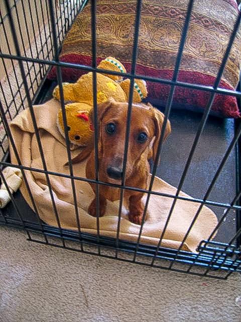 CagedBitch.Com